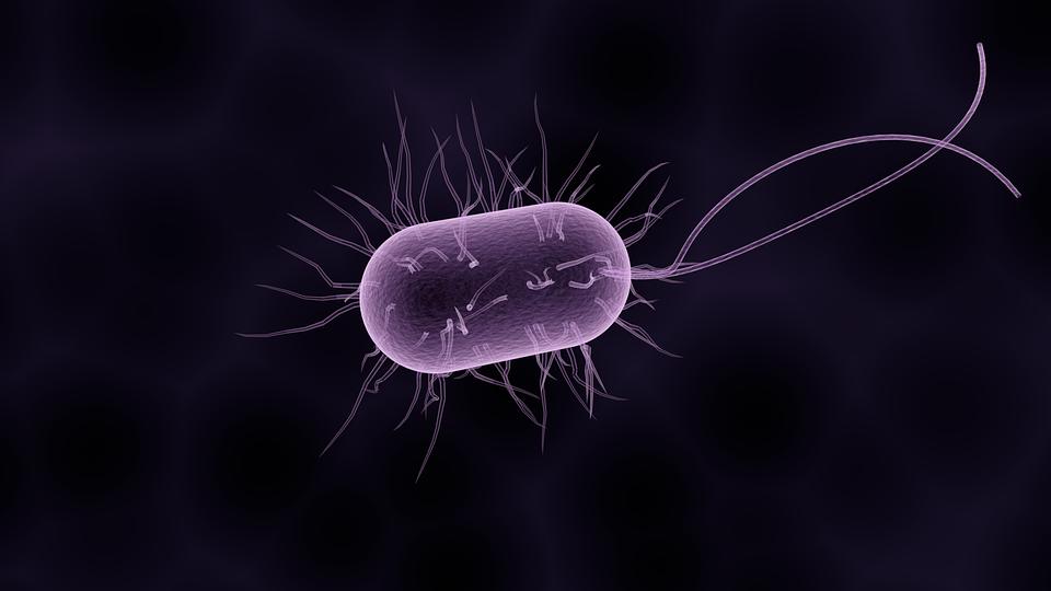 bacteria_listeriosi_gravidanza