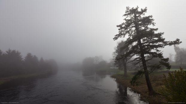 leaning-tree-in-fog